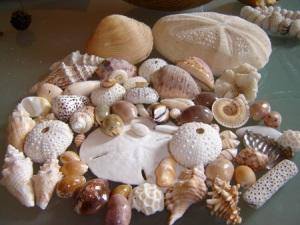 Sort out sea shells.