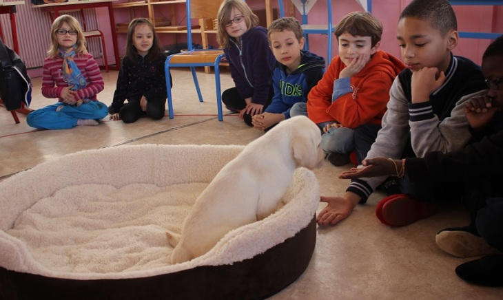 Montessori contact animal