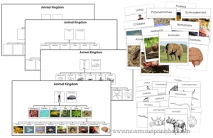 Montessori zoologie