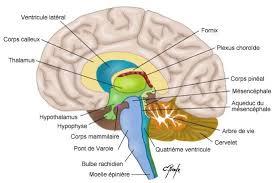 Les effets négatifs du stress sur le cerveau.
