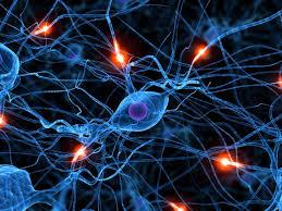 Les neurones